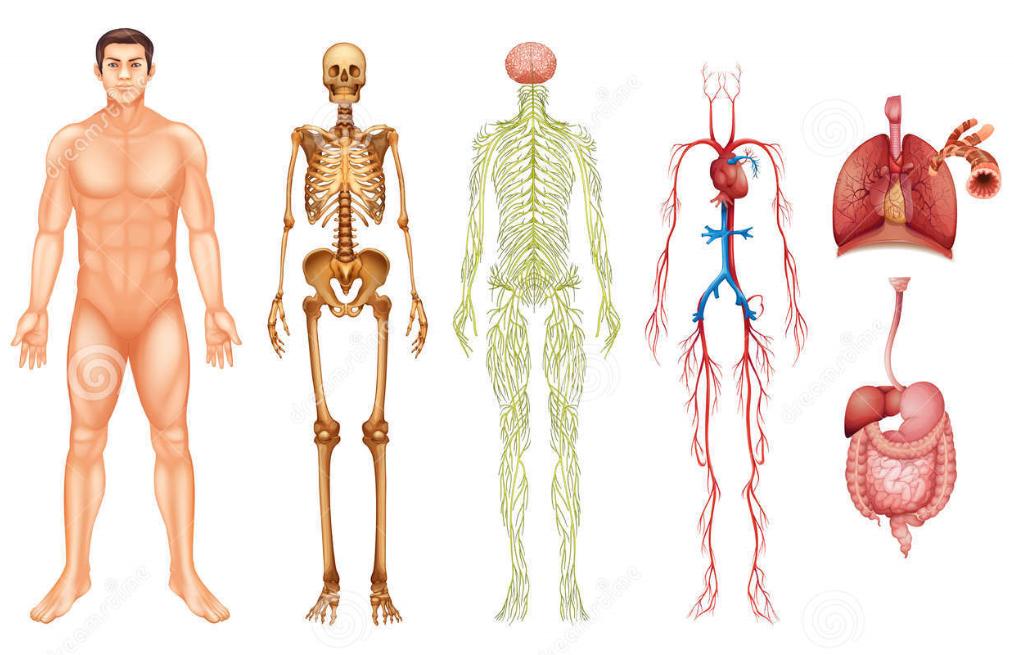 Aprendamos BIOLOGÍA: NIVELES DE ORGANIZACIÓN DE LA MATERIA