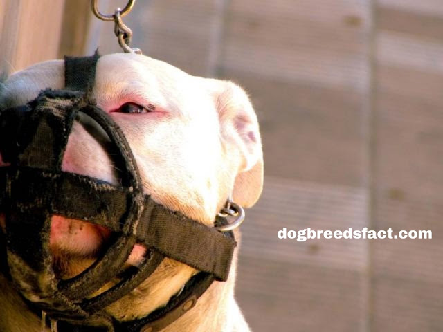 Top 10 Most Dangerous Dog breeds in the world 2020