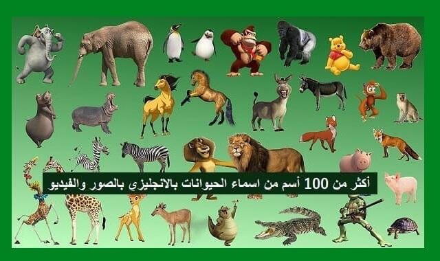 بطاقات مطابقة أسماء الحيوانات 1