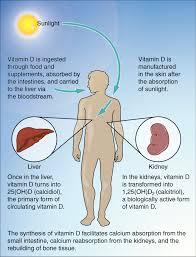 Sunlight benefits and vitamin d,sunlight,sunlight benefits
