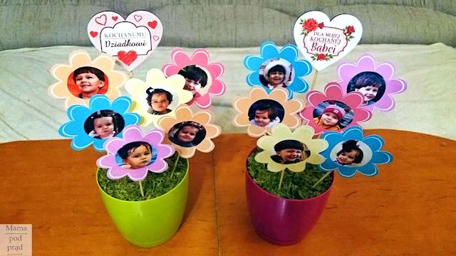 Dzień Babci i Dziadka - prezent DIY - kwiaty w doniczce