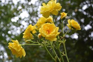 bunga kuning artinya