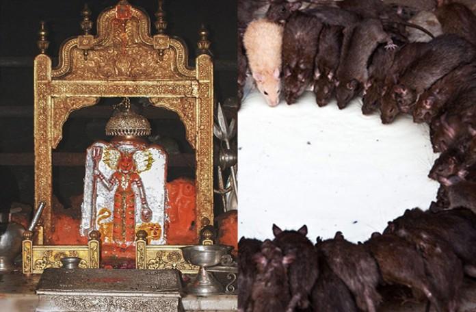 Image result for राजस्थान, करणी माता का मंदिर