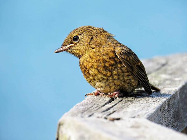 Bird in Ardmore Ireland