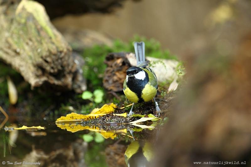 Fotohut – Vogels