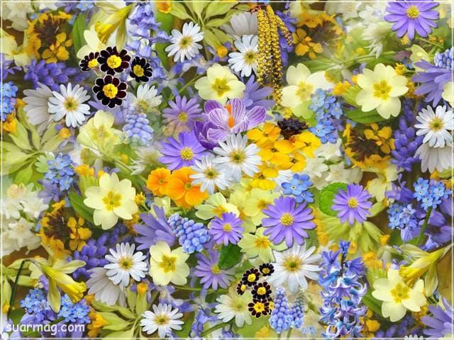 صور زهور 5 | Flowers Images 5