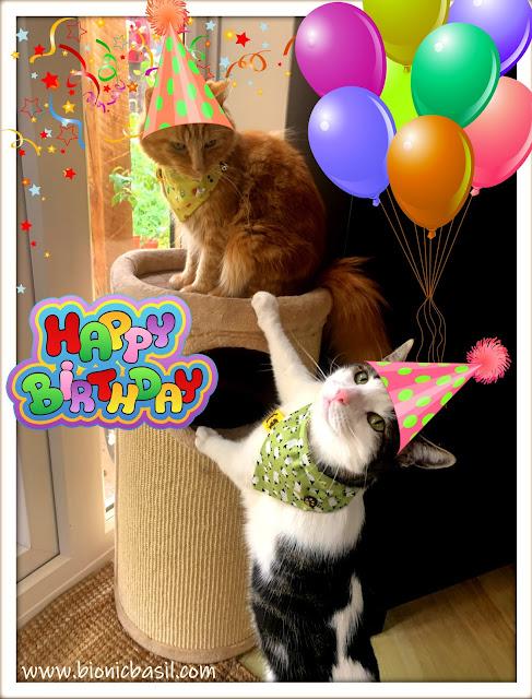 Birthday Boys Melvyn and Fudge ©BionicBasil® Pawty Time