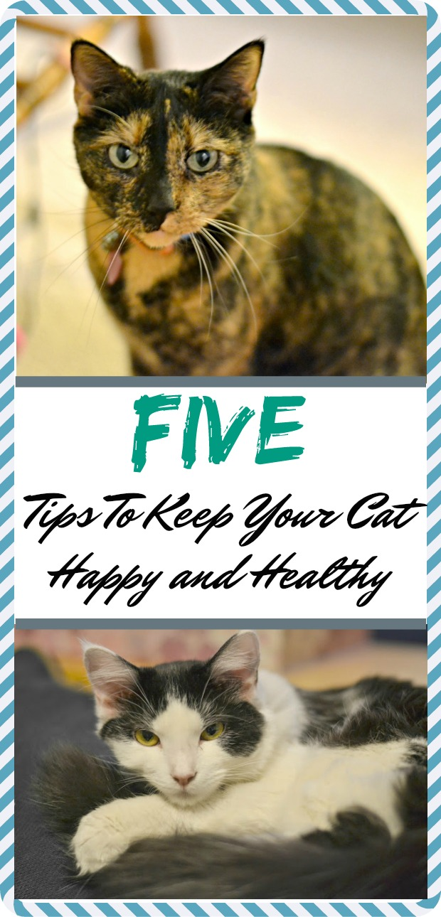 Pet nutrition, Vet visits, Cat health, Veterinarian, Preventive care, Pet owners, Five Tips To Keep Your Cat Happy and Healthy, Tips To Keep Your Cat Happy and Healthy