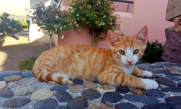 eftalou ginger cat