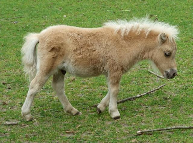 5 Spielplätze im Kieler Süden mit dem gewissen Extra. Der Wildpark in Schwentinental hat viele süße Tiere.