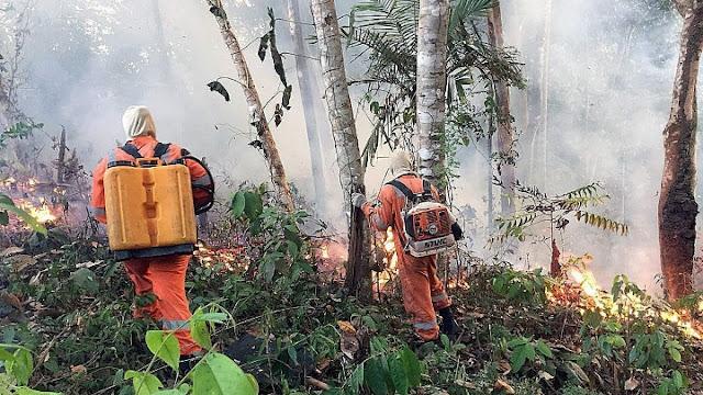 «Αμαζόνιος SOS»: Το μεγαλύτερο τροπικό δάσος του πλανήτη στις φλόγες
