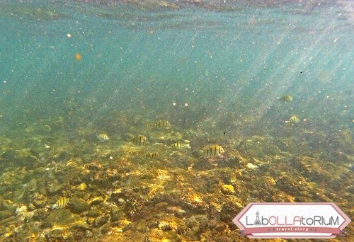 Pengalaman Snorkeling di Pantai Sadranan Yogyakarta