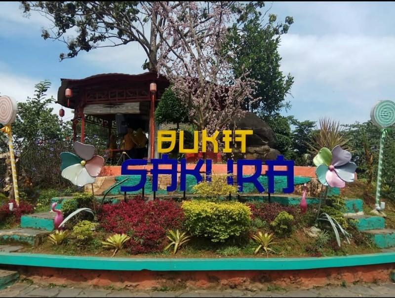 Alamat dan Harga Tiket Masuk Bukit Sakura Lampung