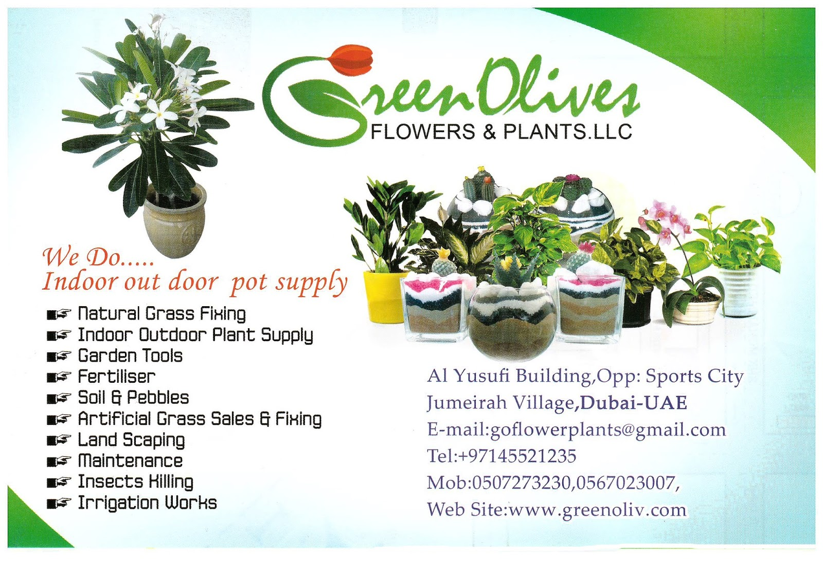 Jvc Community Jumeirah Village Circle Dubai Green Olive Flower And Plants Jvc