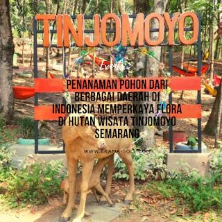 Penanaman Pohon Dari Berbagai Daerah Di Indonesia Memperkaya Flora Di Hutan Wisata Tinjomoyo Semarang