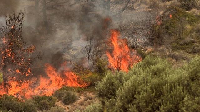 Συναγερμός κατηγόριας 4 στην Αργολίδα για κίνδυνο πυρκαγιών την Δευτέρα 2/8