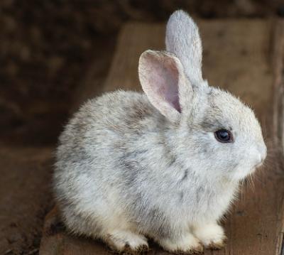 Cara merawat anakan kelinci tanpa induk