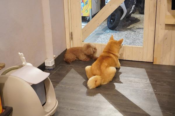 台南永康區美食【魔法咪嚕寵物主題餐廳】環境介紹、寵物小狗