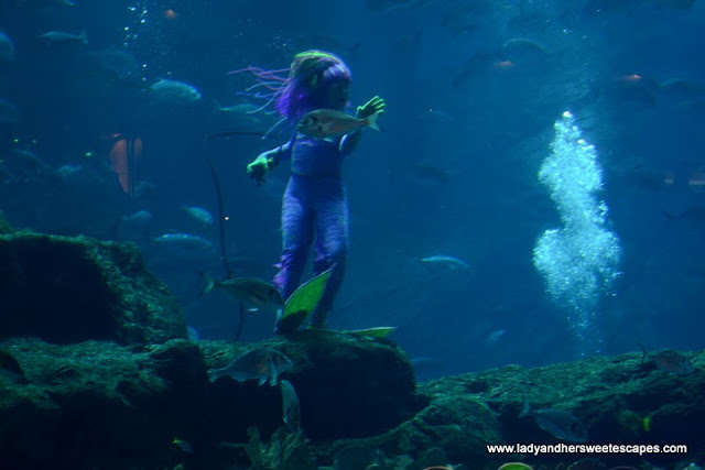 The Mermaid at The Dubai Mall
