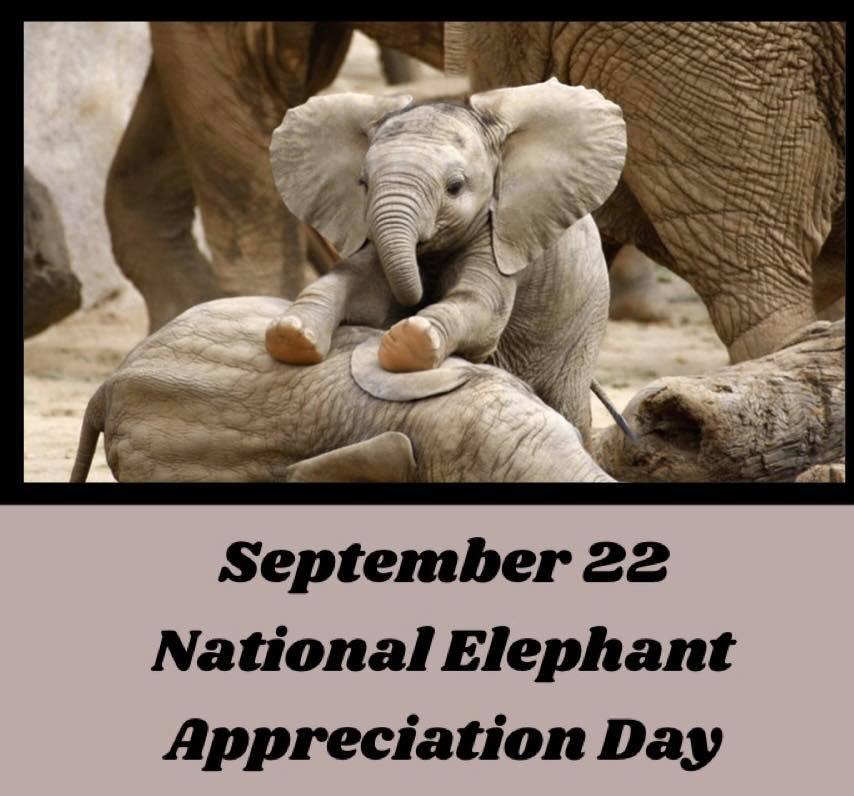 National Elephant Appreciation Day Wishes For Facebook