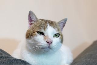 cat portrait bokeh