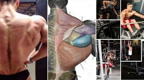 و رُجوعاً لِعَضلات الظَّهر و التي هي مَوضوع دَرسِنا لِهذا اليَوم, فَهي تَنقسم في كمال الأجسام إلى أربعة أقسام وهي : عَضلة الظَّهر العُلوِية (التّرابِيز) - عضلات الظّهر...