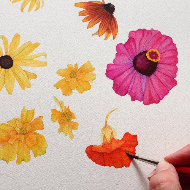 summer flowers, watercolor summer flowers, painting process, watercolor process, nasturtium flowers, zinnias, marigolds, rudbeckia, black eyed susan, Anne Butera, My Giant Strawberry
