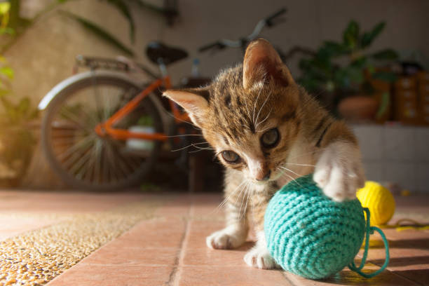 Toys that Cats Love – And Play With