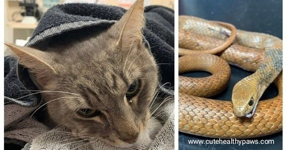 Cat saves kids from snake