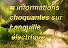 5 informations choquantes sur l'anguille électrique