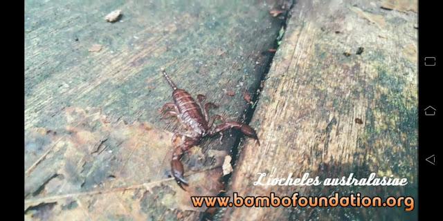 Makanan kalajengking di alam