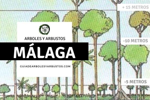 Arboles y arbustos de la provincia de Málga