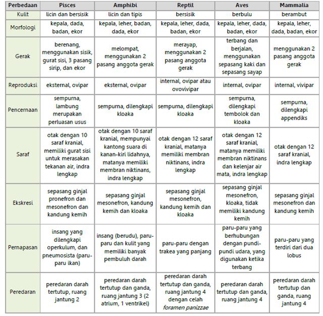 Perbedaan kelas kelas filum chordata