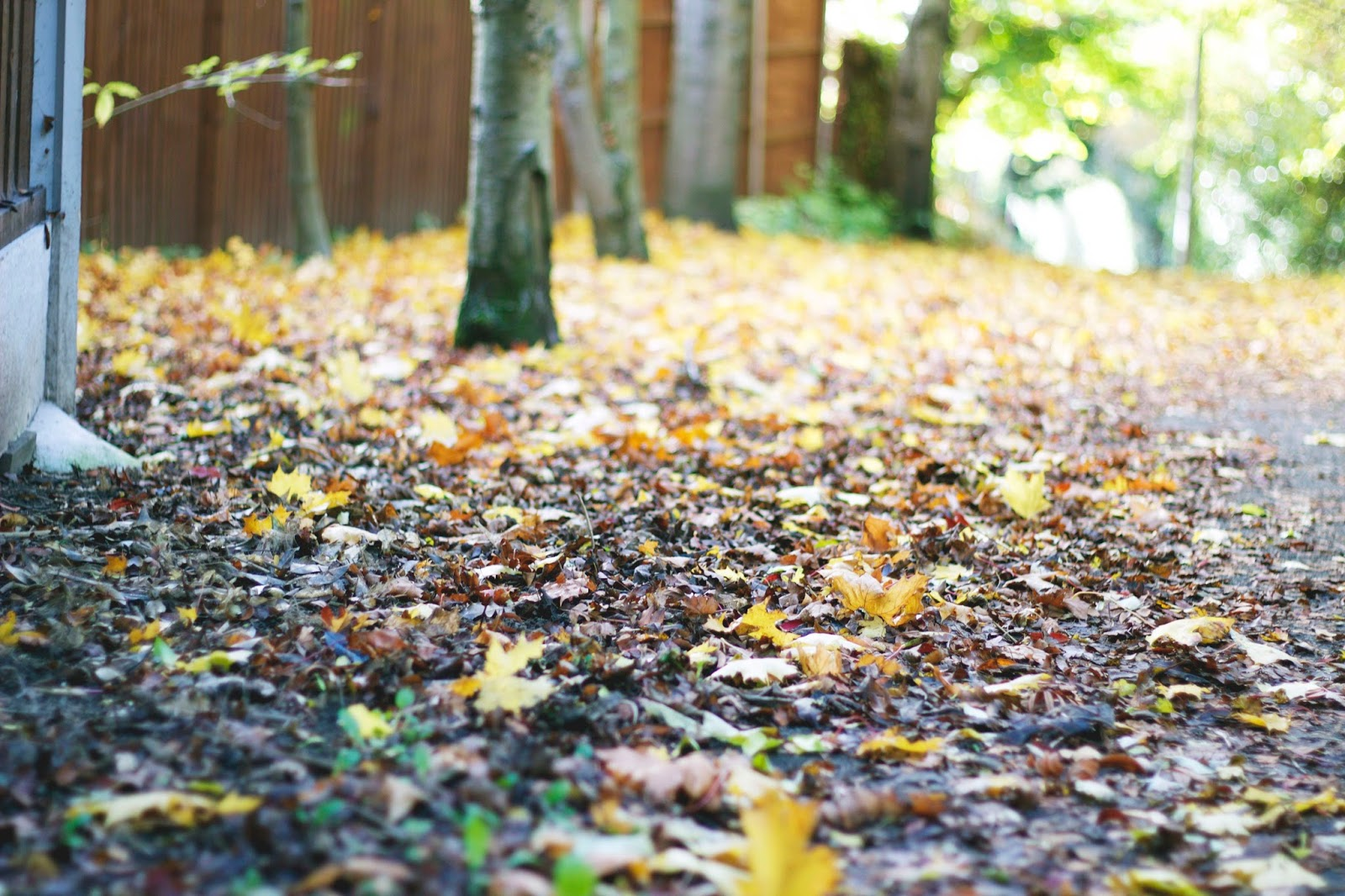 Leaves, Belper, Derbyshire, Autumn, Katie Writes, Katie Writes Blog, Seasonal, Seaons,