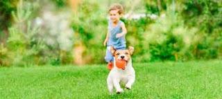 pet safe lawn care
