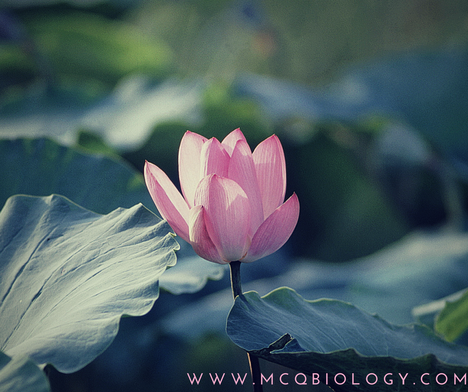 MCQ Biology - Learning Biology through MCQs: Botany Multiple