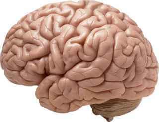 beyinde tümör