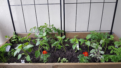 Raised garden bed filled with various of plants and flowers.
