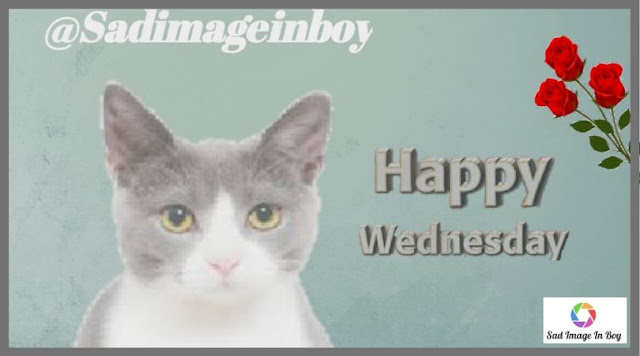 Happy Wednesday images | happy meme, wednesday good morning, good morning wednesday gif, wednesday funnies