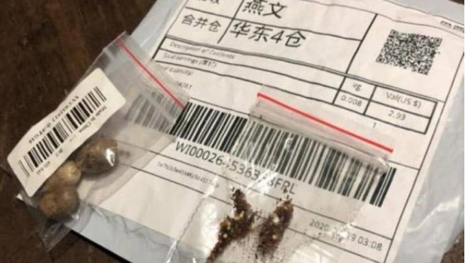 Alerta! Laboratório encontra fungos, bactérias e possíveis pragas em pacotes de sementes misteriosas vindas da China