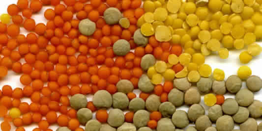 مصادر البروتين النباتي عدس