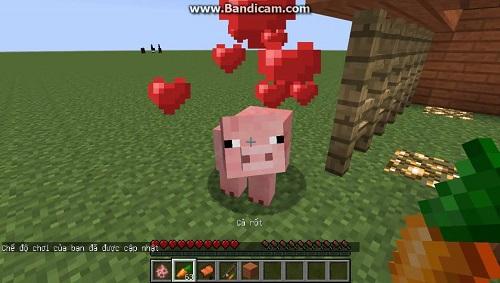 Cưỡi lợn rất đơn giản với cần câu cà rốt làm vật dẫn đường