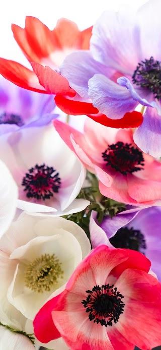 Beautiful multi color flowers wallpaper