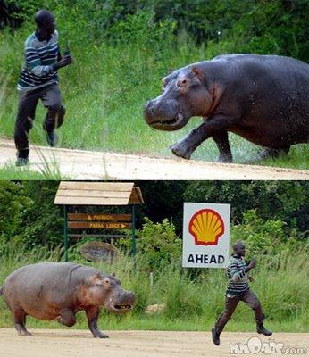 Hipopotamo atacando