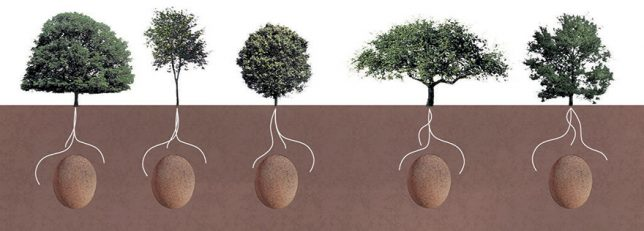 You Die You Are Buried In Fetal Position In An Organic Cocoon, And Then You Become A Tree