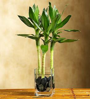 Plant and love low light indoor plants - Plantas resistentes de interior ...