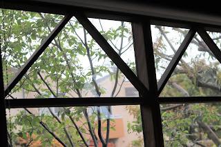 アトリエのガラス越しに見えるジューンベリー