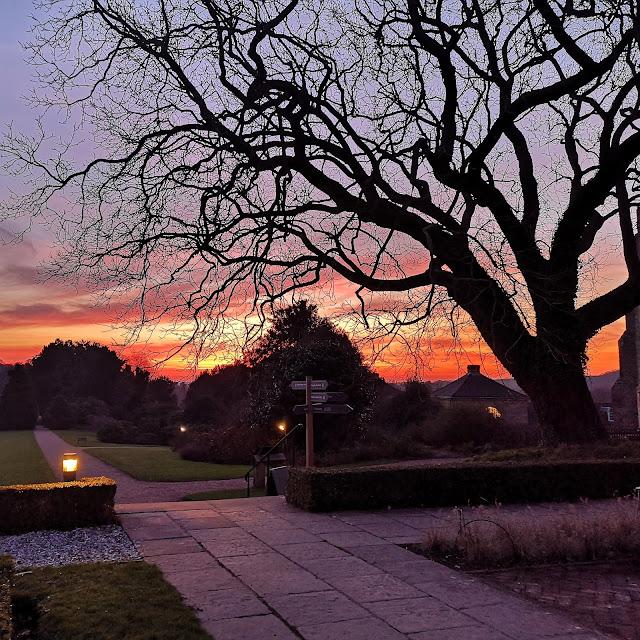 Gorgeous sunset view, seen through a tree