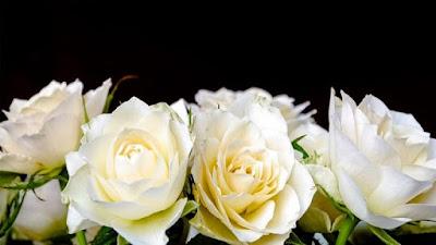 Maksud Tersirat Bunga Ros Putih