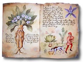 Plantas Mágicas: La Mandrágora